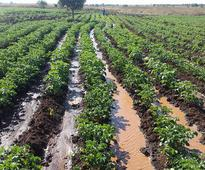Cuanza Norte: Ministry invests in cassava processing