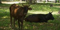 Vanuatu: Spirited away