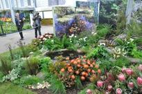 South Africa scoops gold at Chelsea Flower Show