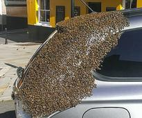 Swarm of 20,000 bees follows car around for two days