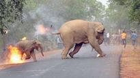 'Hell is here and now': The real story of an elephant and her calf's disturbing escape photo