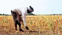 Pesticide poisoning: Maharashtra govt suspends DOA; farmer death toll rises