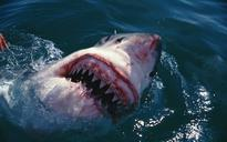 Woman survives rare great white shark attack in Sydney's Botany Bay