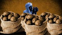 Harvest of misery: How note ban destroyed Punjab's potato farmers