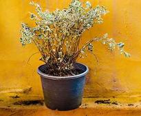 Ways To Save A Dying Plant