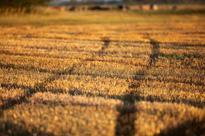 Carbon price worries farmers, fertilizer makers