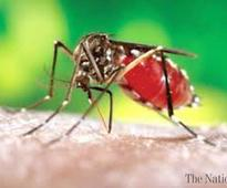 Pindi to be focused for dengue control