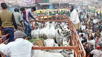 Watch: Cow vigilantes thrash traders for allegedly possessing beef, force them to say 'Jai Shree Ram'