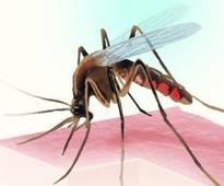 Pune on feverish high with 96% of chikungunya cases in Maharashtra