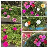 Raising flowers in the summer