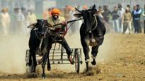 Shameful black mark for India: PETA calls Kambala bill a move backwards