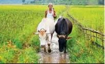 Telangana wants Krishna River Management Board to give 103 tmc ft water for Rabi
