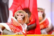 Chinese New Year 2016: Best messages, wishes, greetings to be shared on Year of Monkey