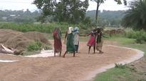 Pre-monsoon showers damage harvested paddy