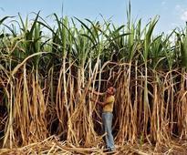 Uttar Pradesh sugarcane dept to serve notice on DuPont over 'misleading' ad