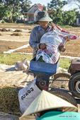 Villagers harvest coffee in Vietnam