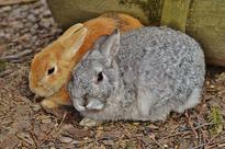 Tell Air Force Cadets to Stop Beating Rabbits to Death!