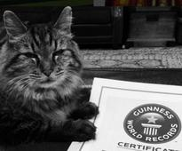 Nine lives out: World's oldest cat according to Guinness Records dies at 27