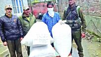 Drug peddler held, 25 kg poppy straw recovered
