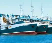 West Australia's Mareterram Wants to Rebuild Export Markets for its Shark-Bay Caught Shrimp