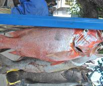 Boat captain, 27, wins Lamu fishing competition with 32kg catch