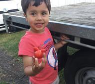 Kiwi boy Otto Madsen grows 'Bugs Bunny' tomato