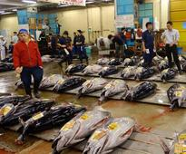 Tuna prices up as global catch falls