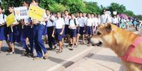 Making Goa Rabies free