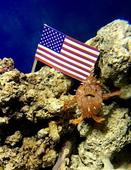 Aquarium staff have held an underwater inauguration for a Donald Trump lookalike frogfish