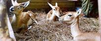 Nandankanan zoo in Odisha gets four more deer