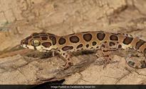 New Lizard Species Discovered In Mumbai, Named After Bengaluru-Based Scientist