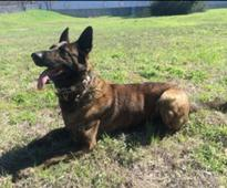 Missing Williamson County police dog found dead