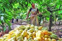 Mondelez India helps expand cocoa footprint