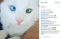 Turkish cat with blue-and-green eyes becomes internet darling