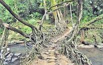Meghalaya's living root bridges nominated for Nif award