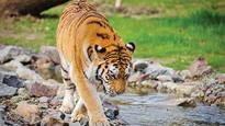 NTCA opposes plan to subsume under bigger wildlife body