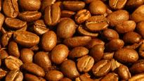 Coffee arabica genome sequenced for first time