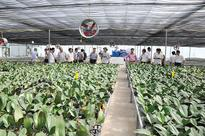 Hi-tech agriculture a growing trend
