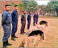 Haryana-trained dogs to guard PM