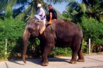 Elephant rescued after 15 years of captivity, abuse