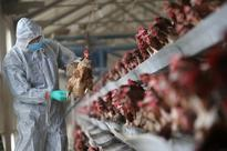 China's confirms sixth bird flu outbreak at duck farm in Hubei province