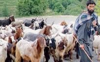 J&K government wants access of meadows for nomads
