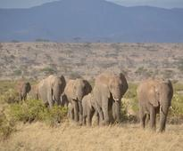 KWS warns of human-wildlife conflict as drought bites into parks