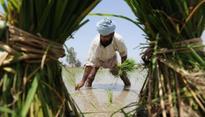 Amarinder knocks on Modi's door: will farm loan waiver end Punjab agrarian crisis?