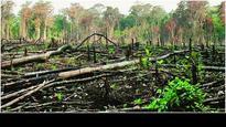 Illegal tree felling in Dang's Purna Sanctuary: PIL