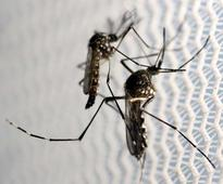 Brazil researchers hope to test Zika virus treatment in a year