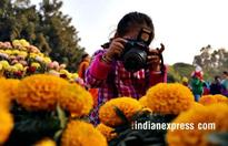 Riot of colours at Chrysanthemum flower show