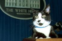 Today, Let Us Remember the Bizarre-Ass Video Game About Hillary Clinton's Cat