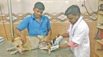 Lending a helping hand to the voiceless