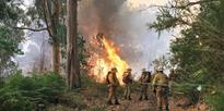 Firefighters stand near forest fire